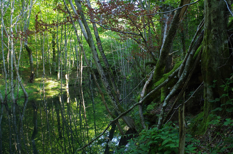 Šipot creek – several kilometres lower (How to make  eutrophic stillwater out of a mountain torrent? Build a hydro-electric power plant on it.) .