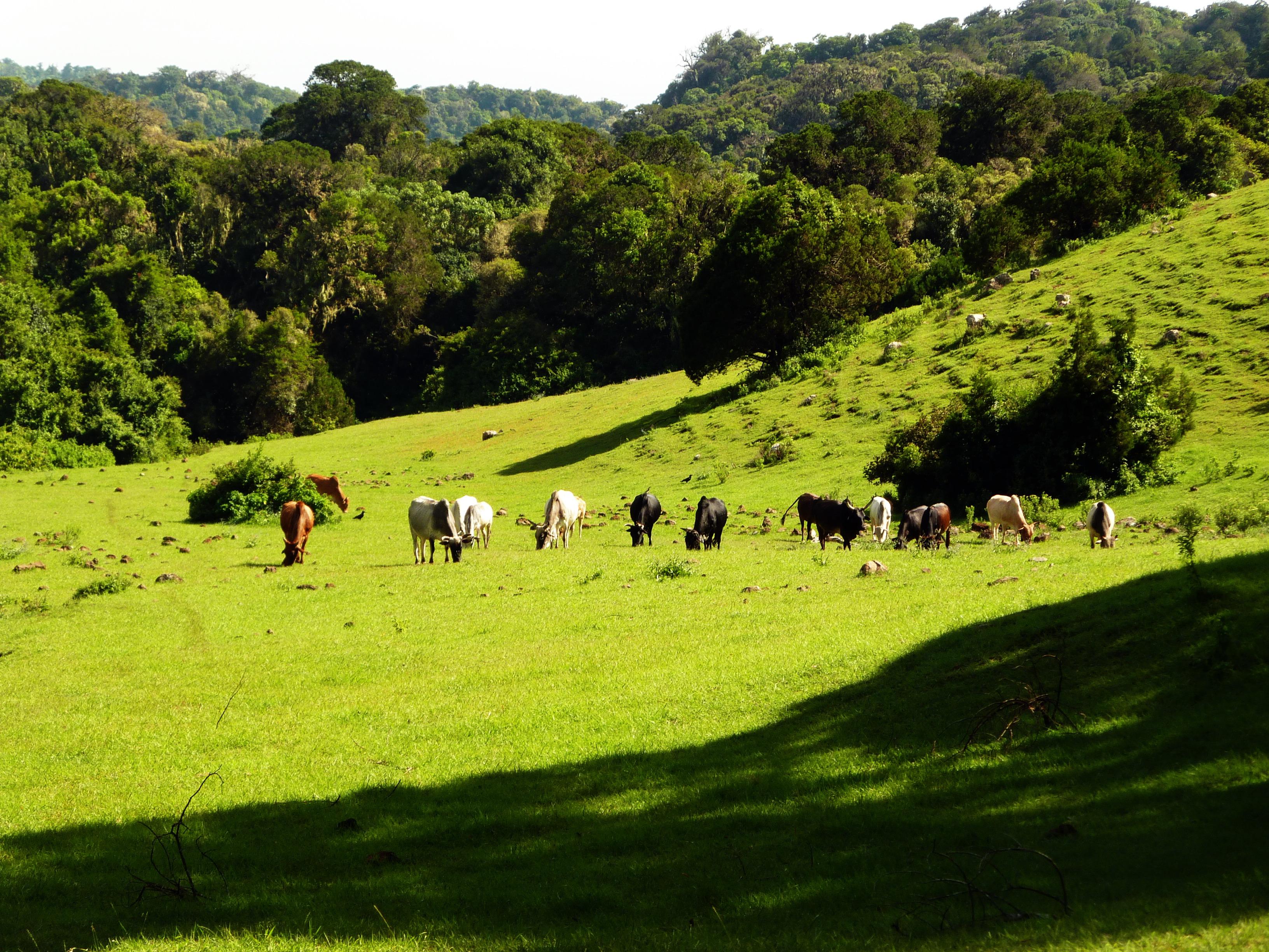 Krajina tesne po období dažďov (koniec decembra) ponúka ideálne podmienky pre pastvu dobytka.